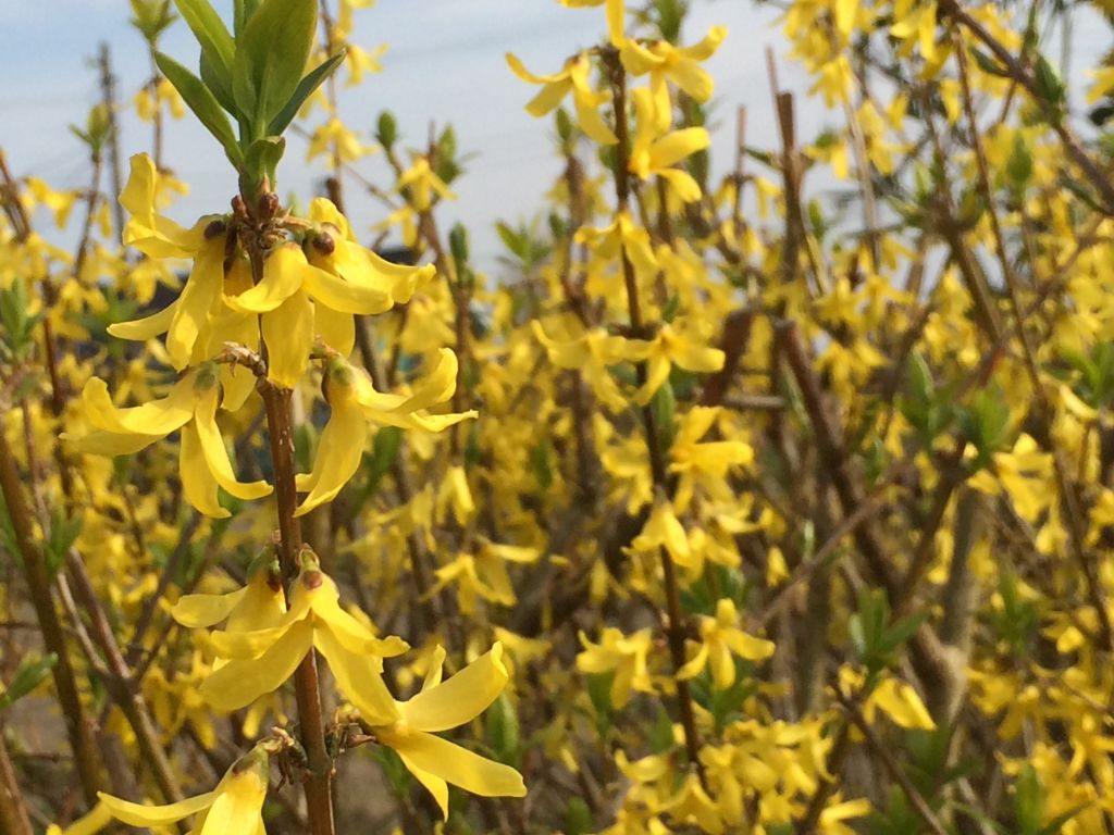 畑の脇に咲いた黄色い花