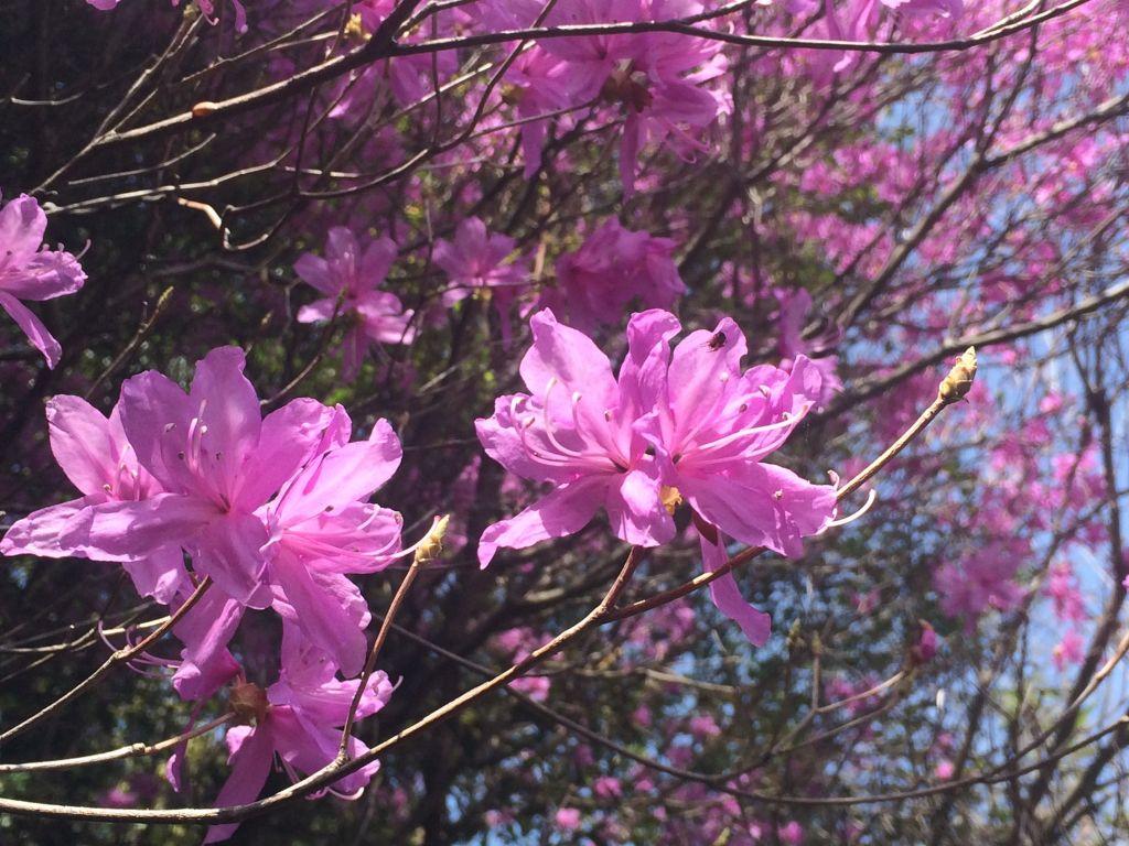 綺麗に咲いたピンク色の花