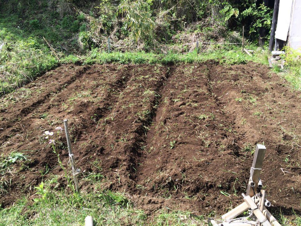 自然農用に作り直した畝