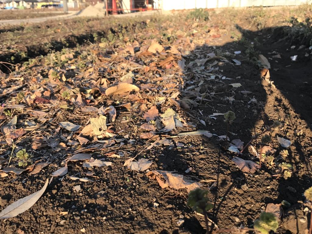畑に落ち葉を被せたところ